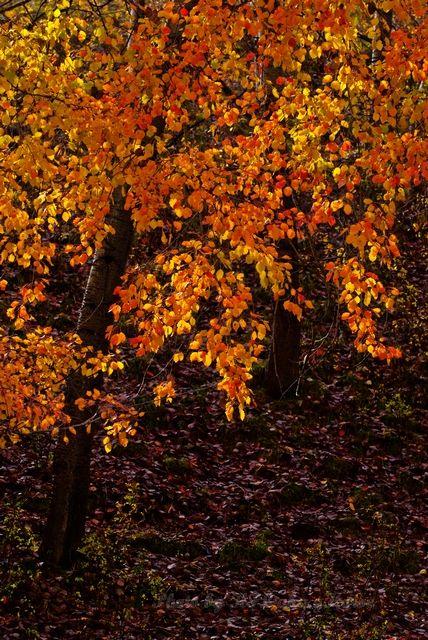 leaf, Red, tree, Xin Jiang