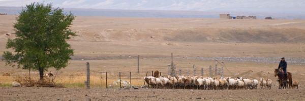 新疆, Xin Jiang, kui zhun, village, shepherd, Sheep