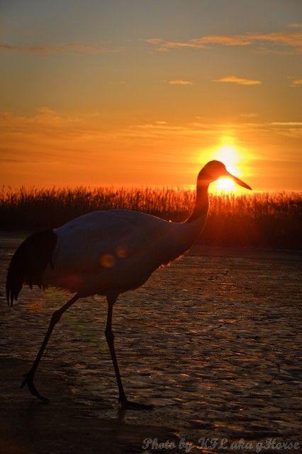 birds, sun rise, orange, xiang hoi, Jilin, 吉林, 向海,