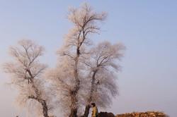 wu shong island, Jilin, 吉林, 雾从岛, tree, sun rise, b