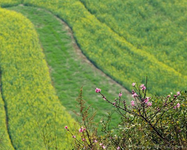 Photo taken in Lou Ping, Yun Nam
