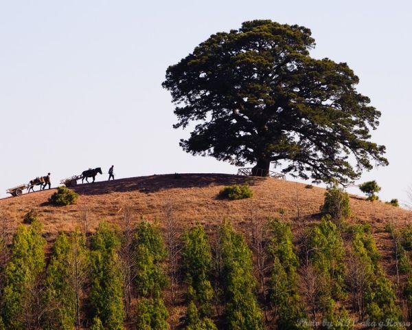 云南, 东川, 红土地, Yun Nam, Dong Chuan, redland, field,