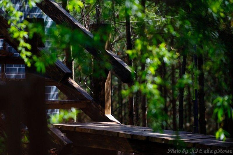 云南, 东川, Yun Nam, Dong Chuan, garden, bridge, tree