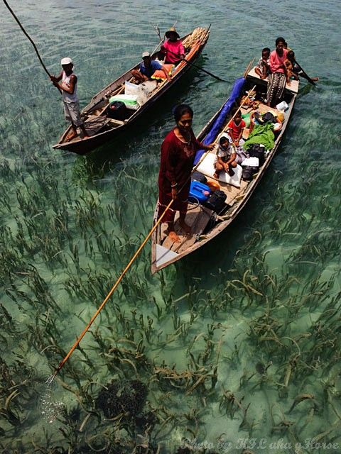 Semporna, Malaysia, weed, sea, boat, people