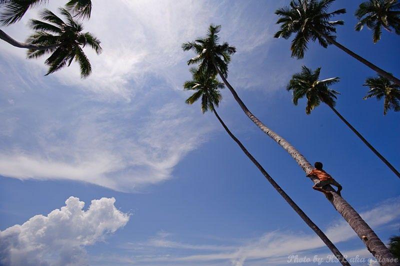 Semporna, Malaysia, sky, blue, cloud, tree, child