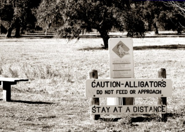 Don't Feed the Alligators at Brazos Bend