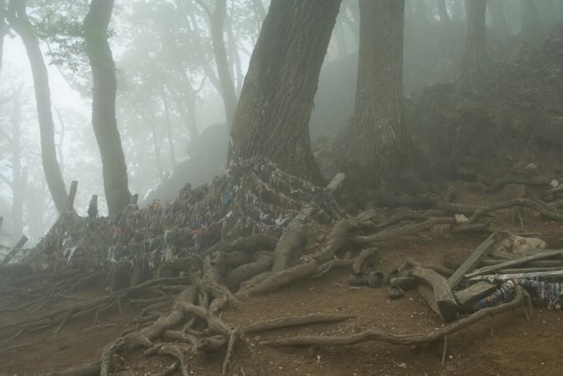 Holy Trees 1