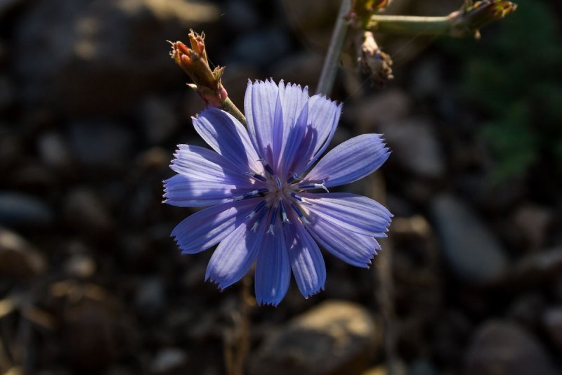 Little Blue One