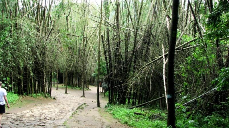 woods again