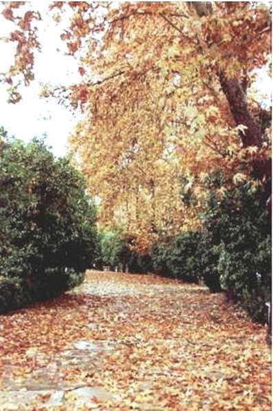 Afifabad Garden,autumn,Shiraz.