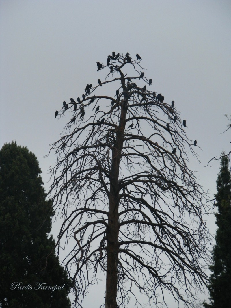 .:: Having Rest In The Rain On The Tree ::.