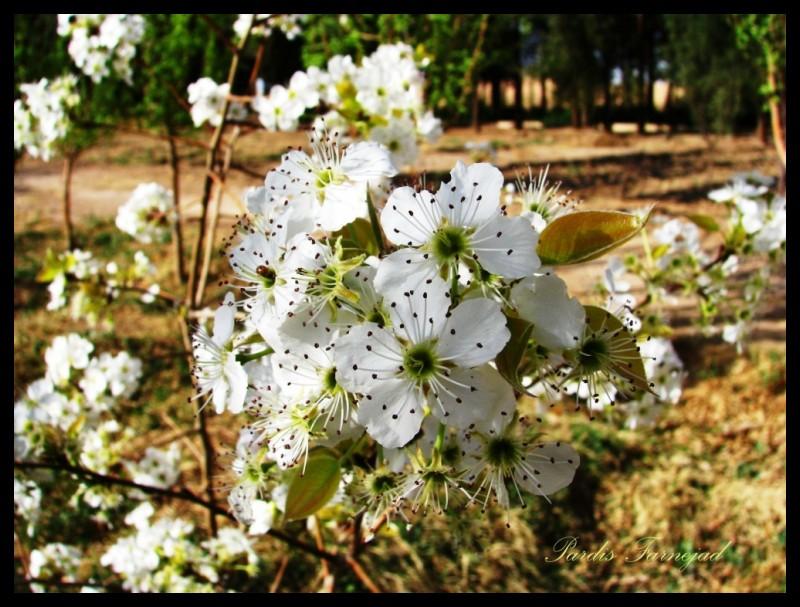 .::Blossoms::.