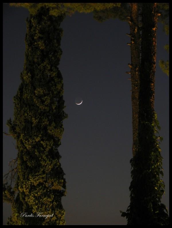 The moon & trees