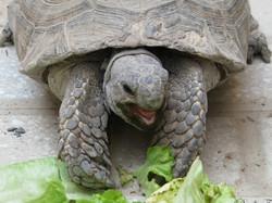 .:: Turtle ::.