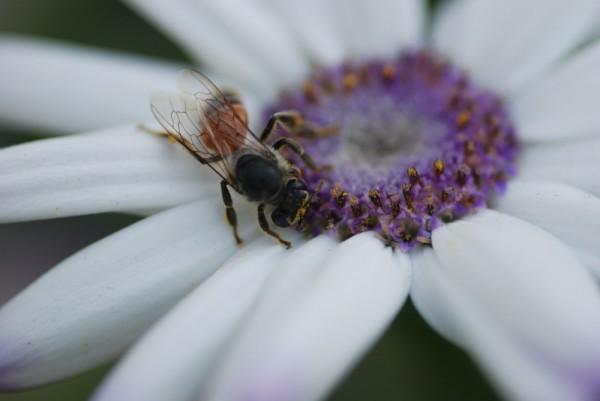 Look Ma, A Bee..!!