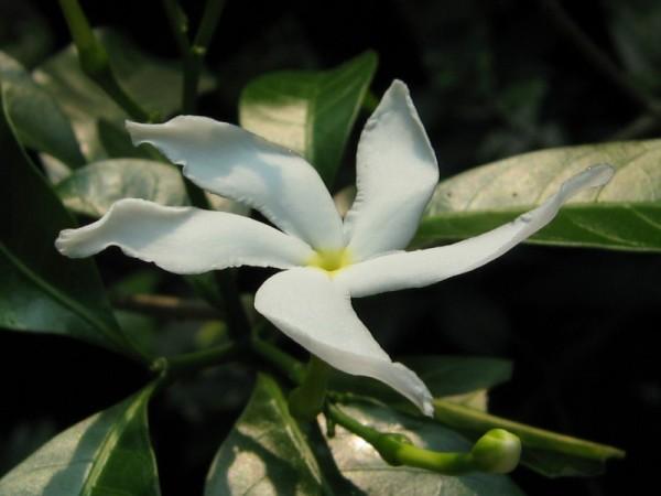 White Flower =P