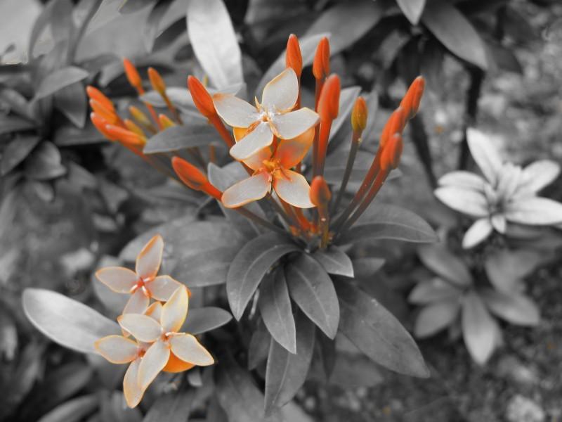 Chrome , Nature , Flower