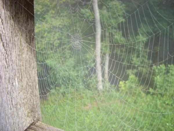 www . Spidernet