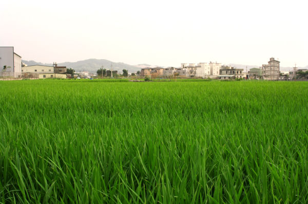 Toufen Miaoli Rural Taiwan