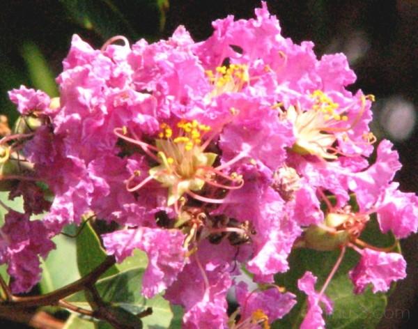 pink tissue flower
