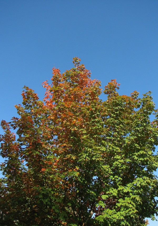 fall trees against the blue sky