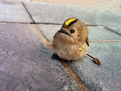 bird, uccello,garda