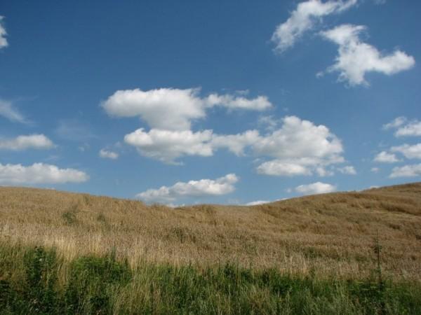 Corn fields and blue sky