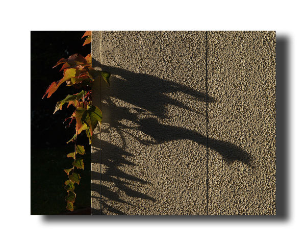 shadow autumn leaf eveningsun