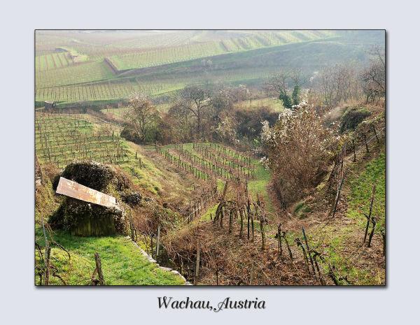 wachau, austria wineyard winter