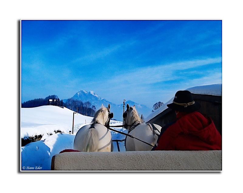lower austria traunstein bad-aussee horse sligh