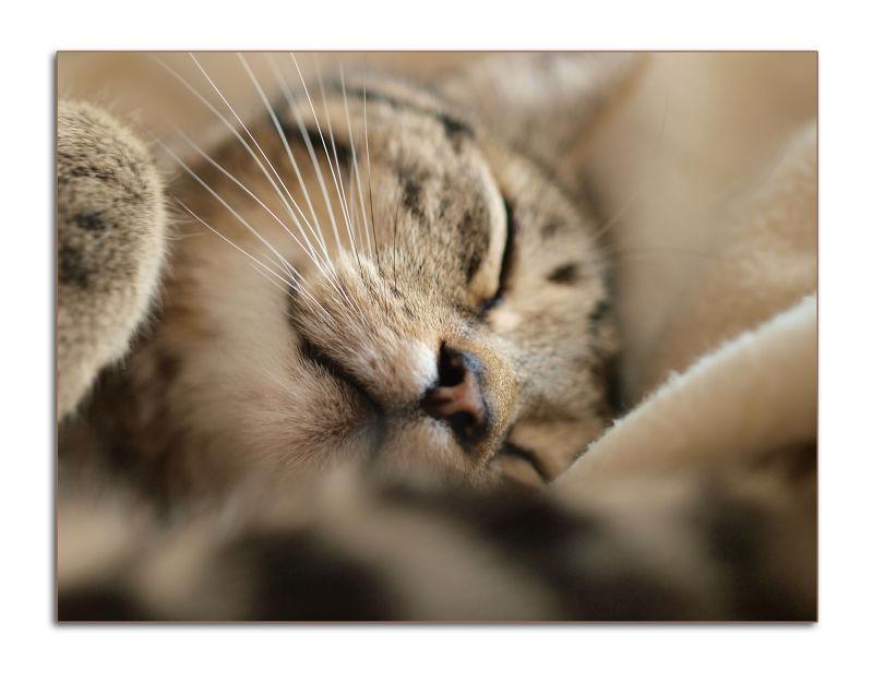 sweet dreams tomcat lara