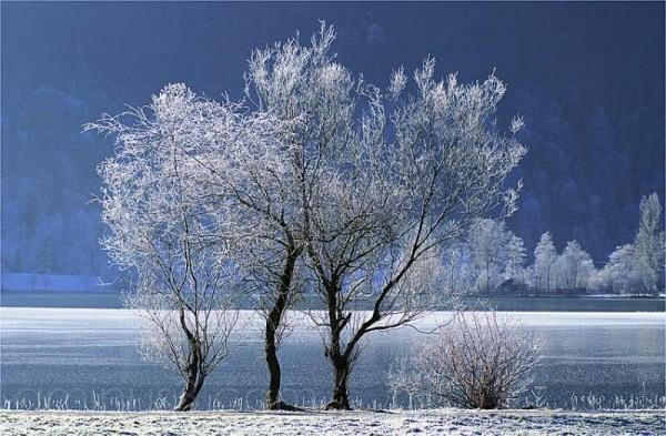 freez, frost, hoarfrost