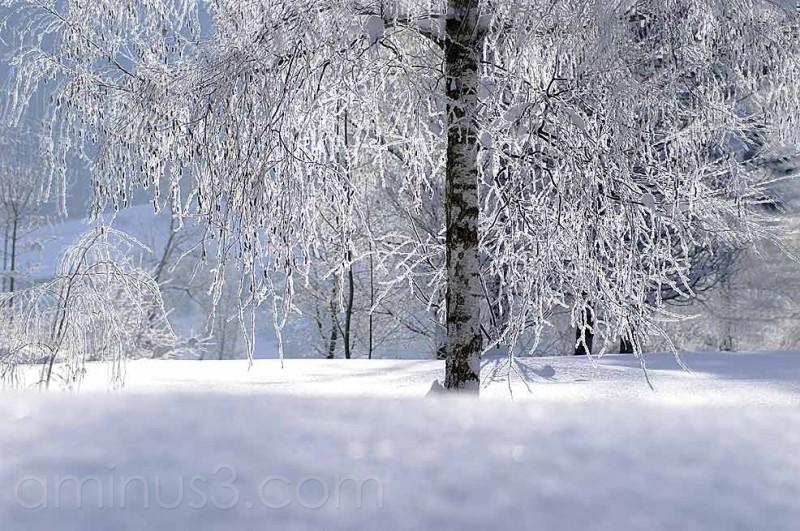 Tree, Baum, winter