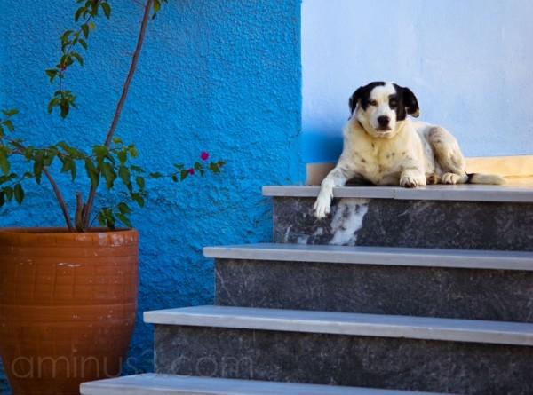 Wachhund, watchdog, greece
