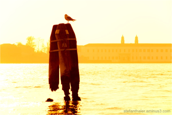 seagull, Möwe