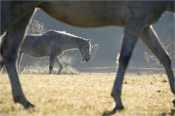 Horses, Pferde