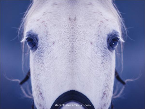 Pferd, Look at me