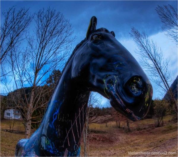 Black Horse, schwarzes Pferd