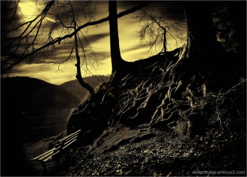 Mystic place, Hechtsee, Wurzel, Baum, tree