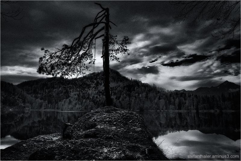 Hechtsee, Magic tree,