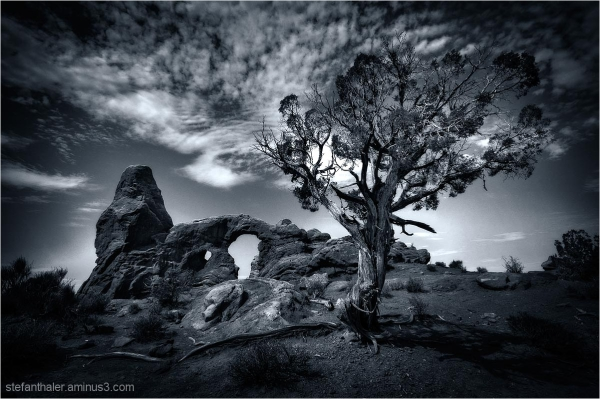 arches tree, arches national park