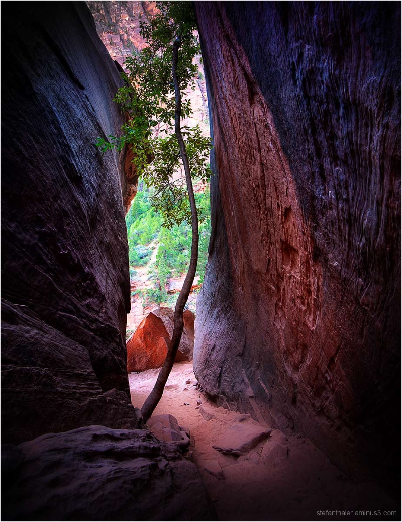 narrow path, emerald pools, zion,