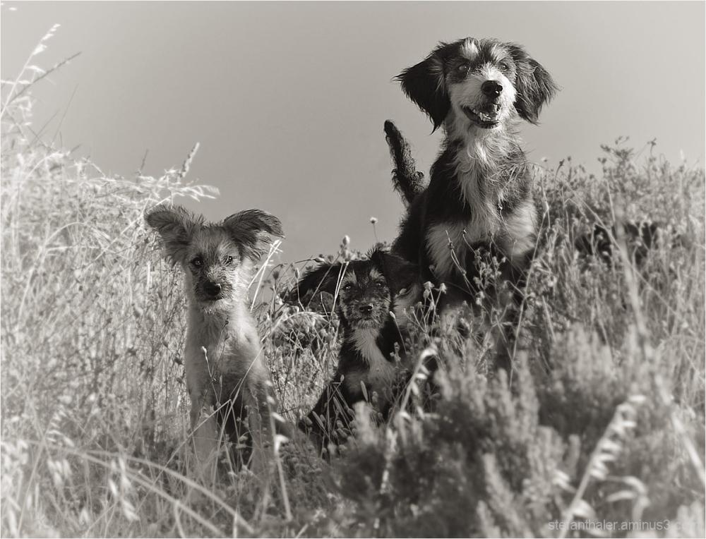 strays, streuner, hunde, freche Hunde, dogs