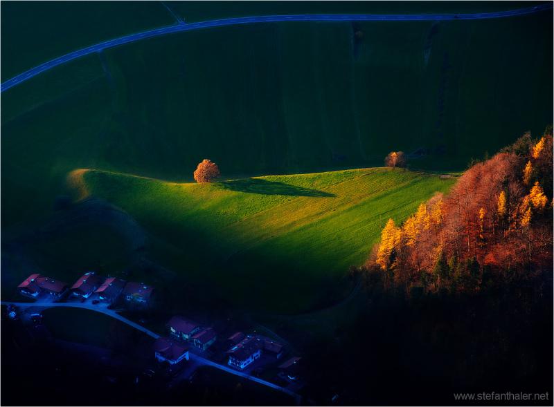 sidelight, tree