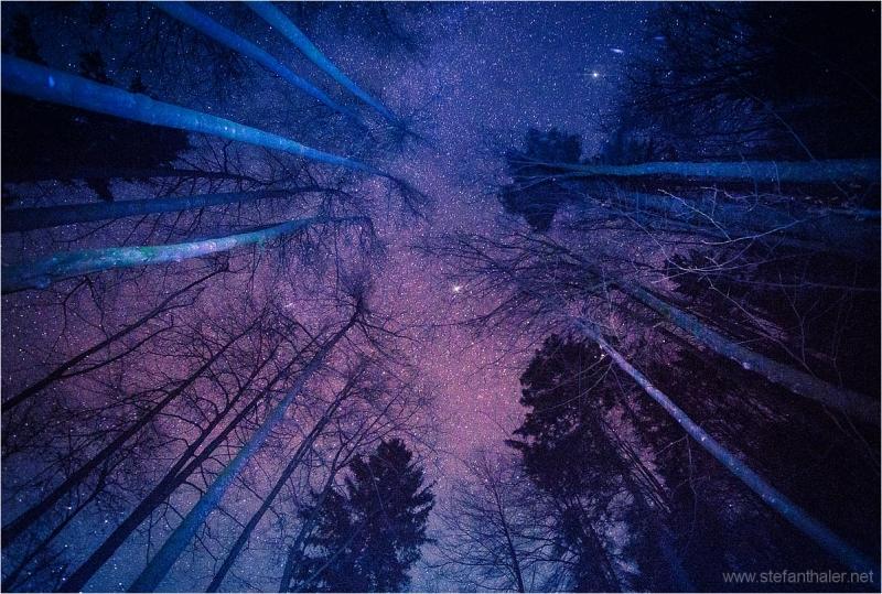 wood, stars night, dark wood, night sky, sony 900,