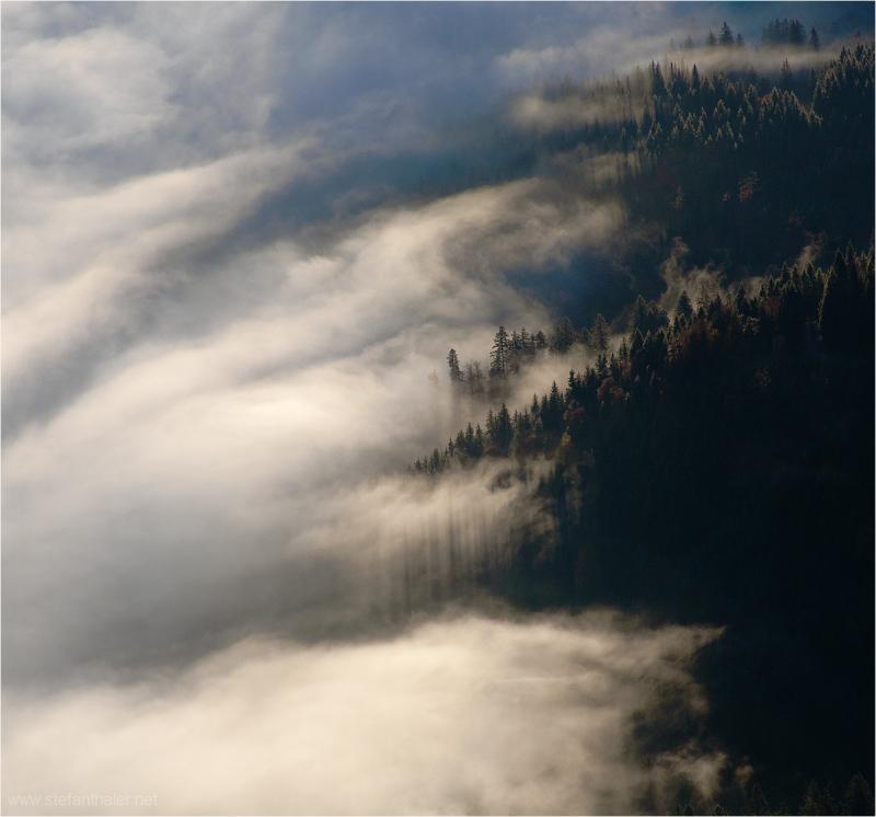 cloud forest, Nebel, Nebelschwaden,