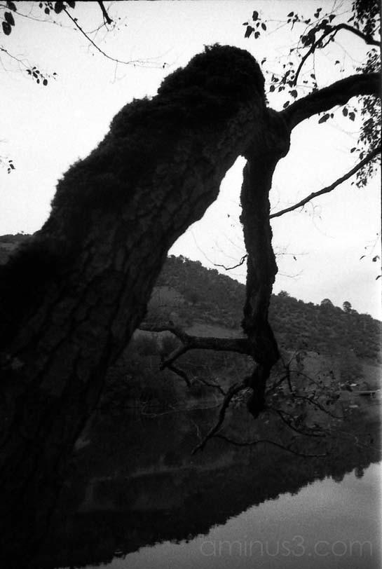 Hunch Back Tree...