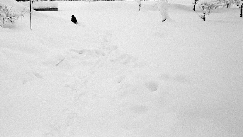 Jinguji in the snow 2