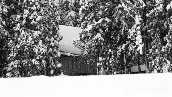 Jinguji in the snow 3