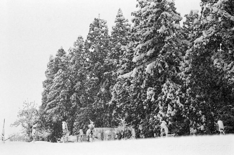 Jinguji in the snow 4